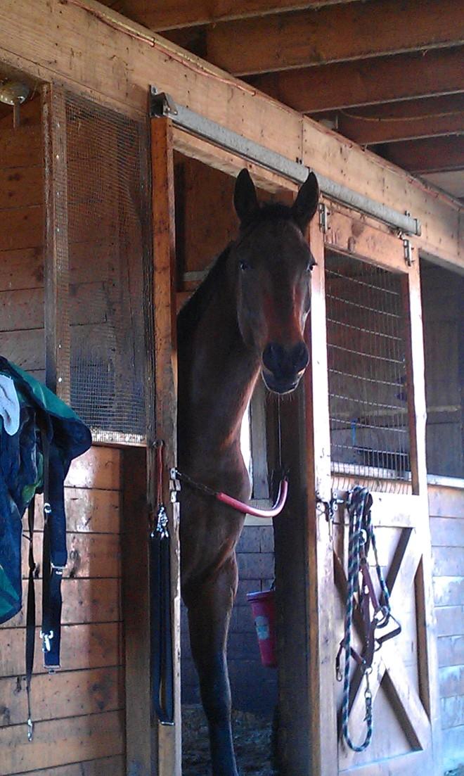 Ike in stall
