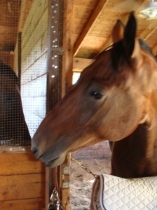 Hey Cigar, Did you hear that I didn't have to show this past weekend?
