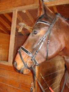 Yes, that is a bridle on Ike!  You know what that means!!