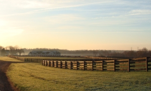 Sunrise over Wyndham Oaks Farm.